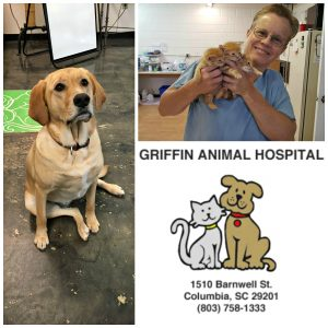 griffin-hospital-collage-2